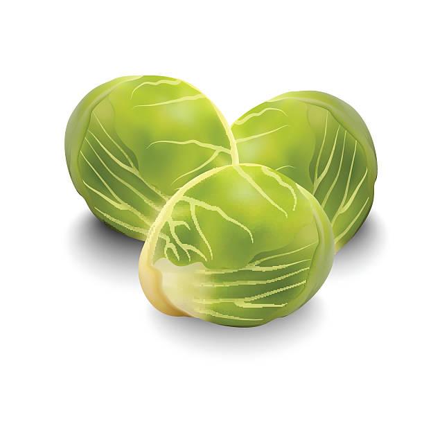 stockillustraties, clipart, cartoons en iconen met brussels sprouts for your design - spruitjes