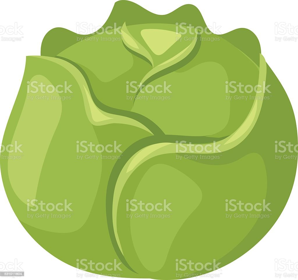 Brussels sprouts vector illustration vector art illustration