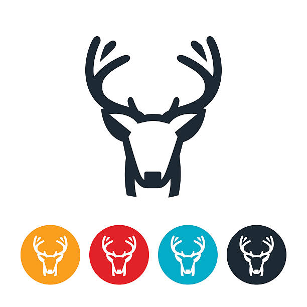 buck mule deer - deer antlers stock illustrations, clip art, cartoons, & icons