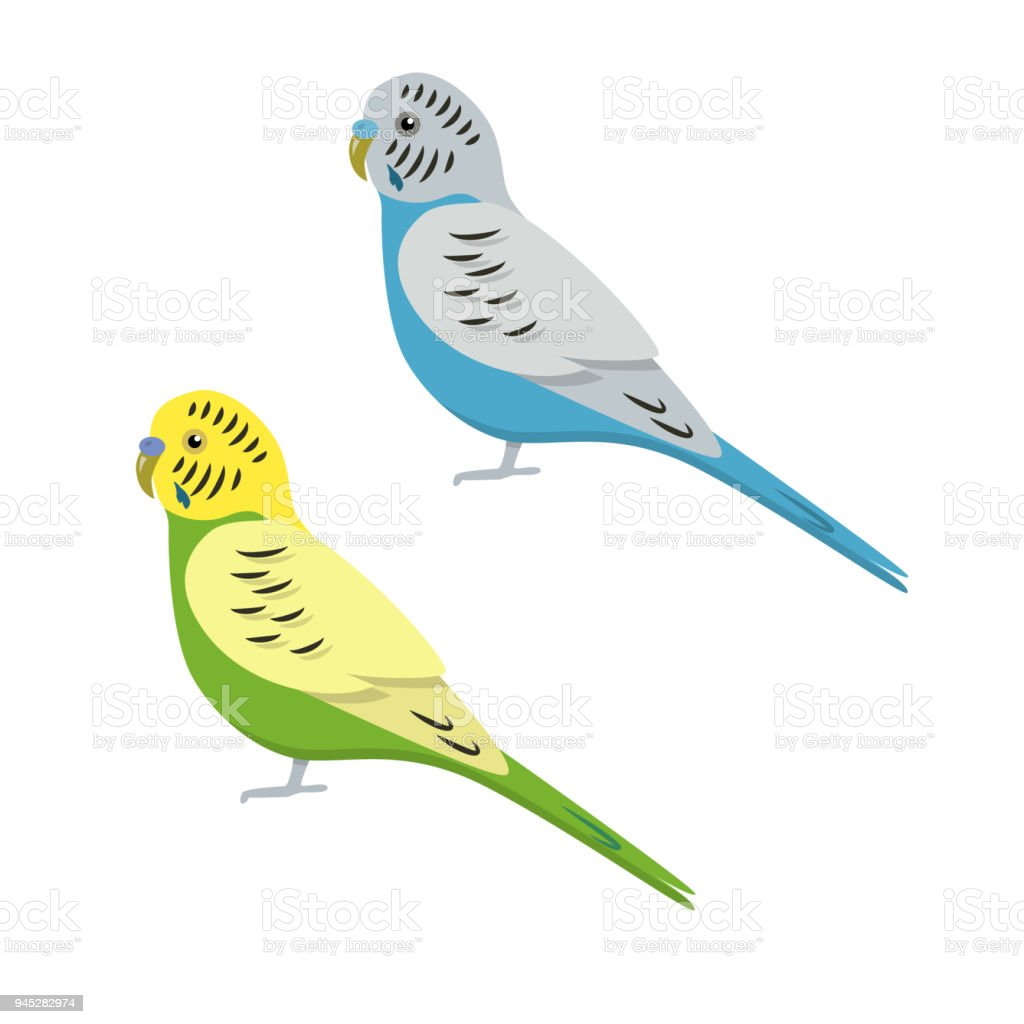 Budgerigar parrot icon in flat style vector art illustration