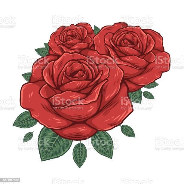 Buds of roses vector illustration vector id882882556?b=1&k=6&m=882882556&s=612x612&h=af u6zfixdqo lcrkhjtgimxs6j16a33szr53cizzm8=