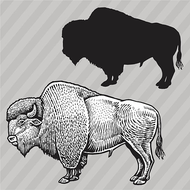 Buffalo - American Bison Pen and ink and silhouette drawings of a buffalo. Check out my