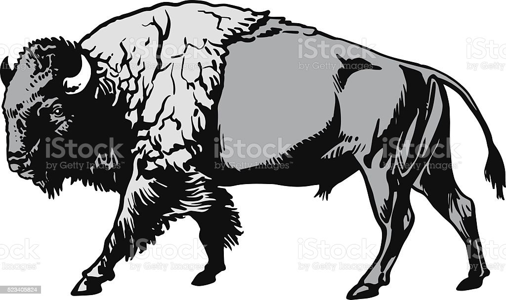 royalty free american bison clip art vector images illustrations rh istockphoto com bison head clipart bison clip art black and white