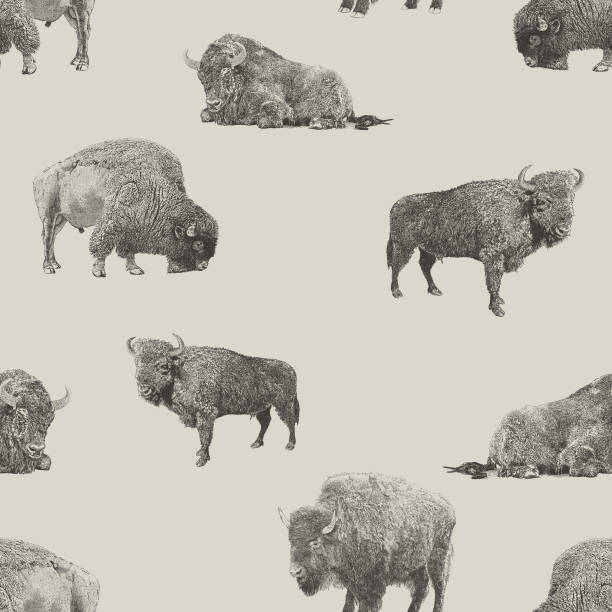 Buffalo & Bison Seamless Repeat Pattern Vector seamless repeat. All colors are layered and grouped separately. Icons are available in more detail and in stroke form from my iStock folio. Easily editable. american bison stock illustrations