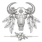 Buffalo or american bison skull