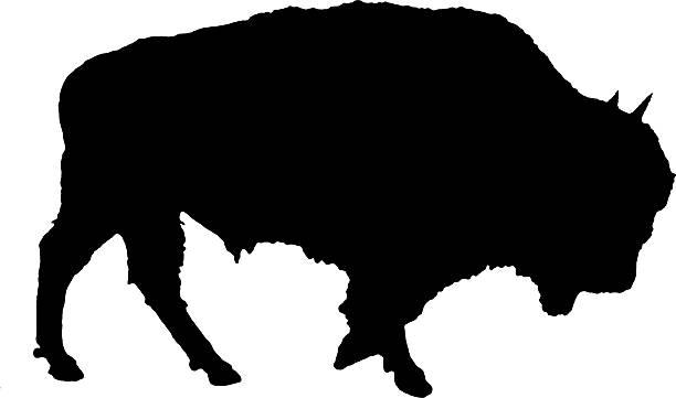 Buffalo Silhouette American Buffalo Silhouette american bison stock illustrations