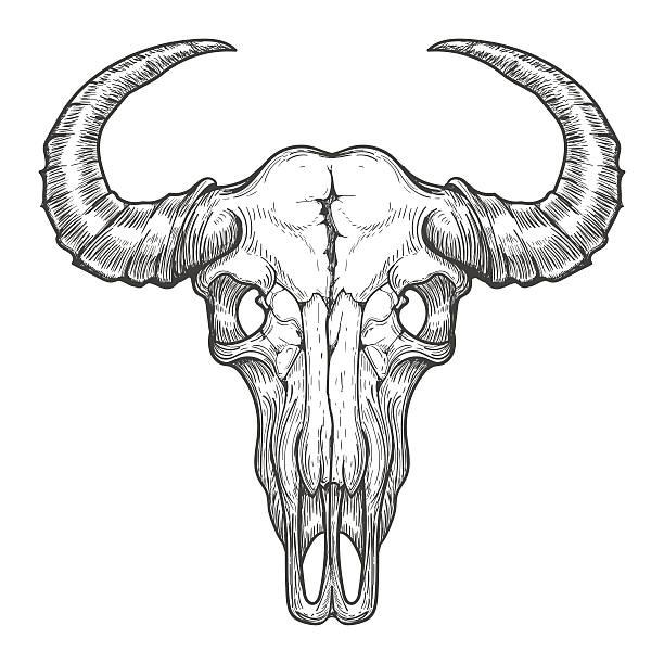 buffalo skull sketch - animal skull stock illustrations