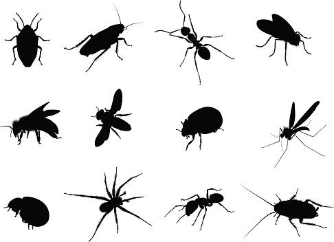 Bug Black Vector Silhouettes Illustration