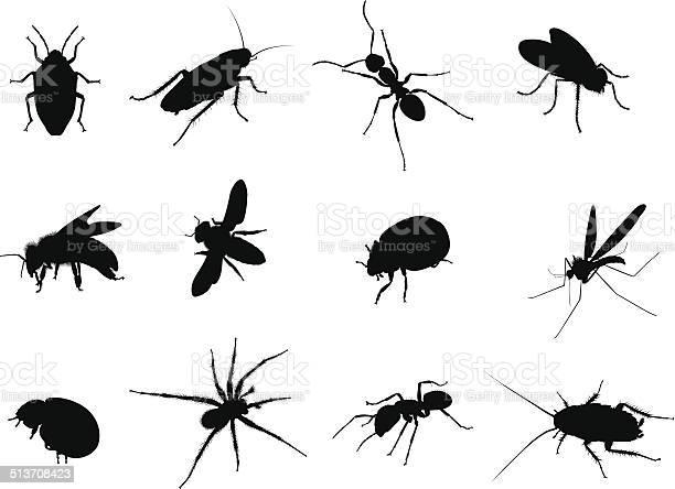 Bug black vector silhouettes illustration vector id513708423?b=1&k=6&m=513708423&s=612x612&h=ieuzdehpmysyupb g6icxn gnrm7bvipe5rurwmawsy=