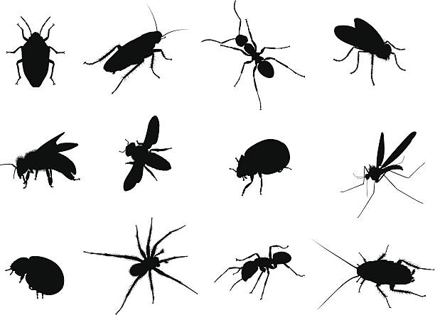 Bug Black Vector Silhouettes Illustration Bug Black Vector Silhouettes Illustration fly insect stock illustrations