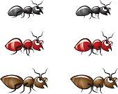 Bug Illustrations 2
