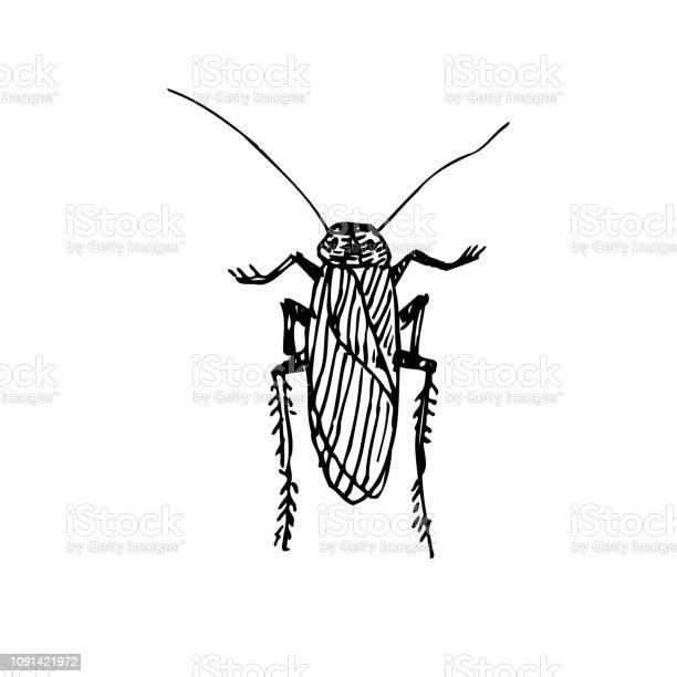 Bug sketch vector id1091421972?b=1&k=6&m=1091421972&s=612x612&h=hwnpjn4o76qikmdiyquy2asikhx1vyxgrokfaircm6g=