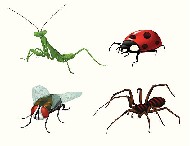 Bugs and Insects vector art illustration