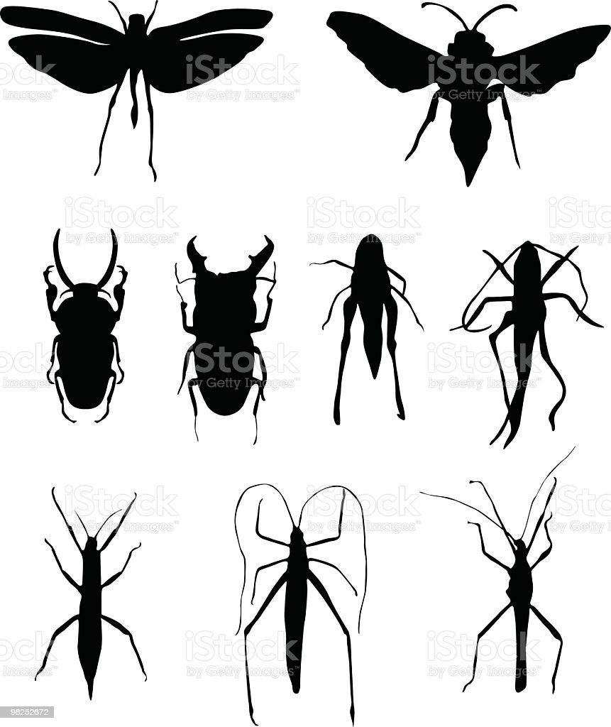 Bugs are every where royalty-free bugs are every where stock vector art & more images of animal