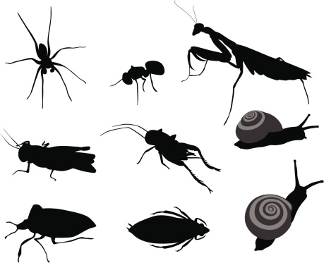 Bugs Bugs Vector Silhouette