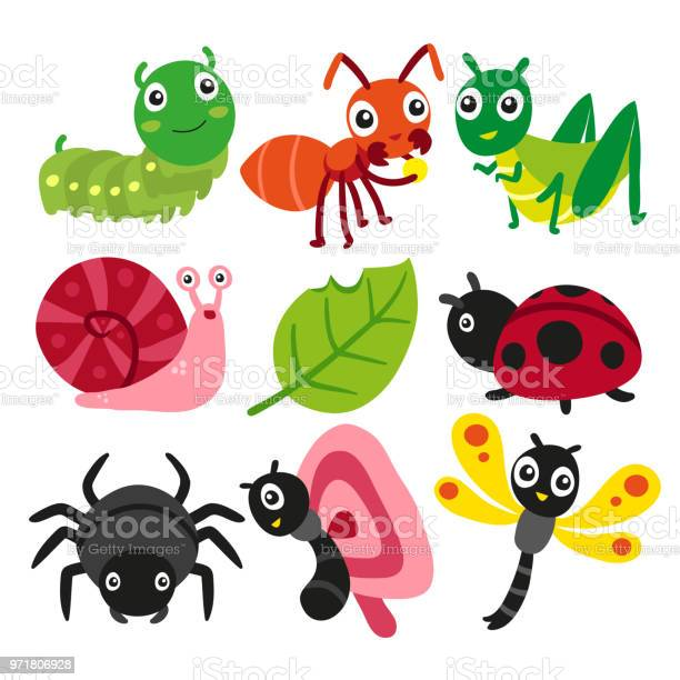 Bugs collection insect vector design vector id971806928?b=1&k=6&m=971806928&s=612x612&h=nip7f2nmhq9p txgjj9l9agsfd0cogwzne1ywef41nc=