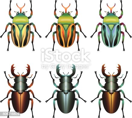 A set of three bright coloured flower beetles and three stag beetles.