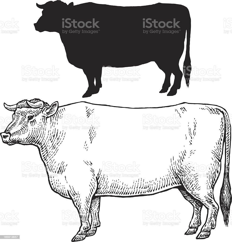 Bull Cow - Farm Animal vector art illustration