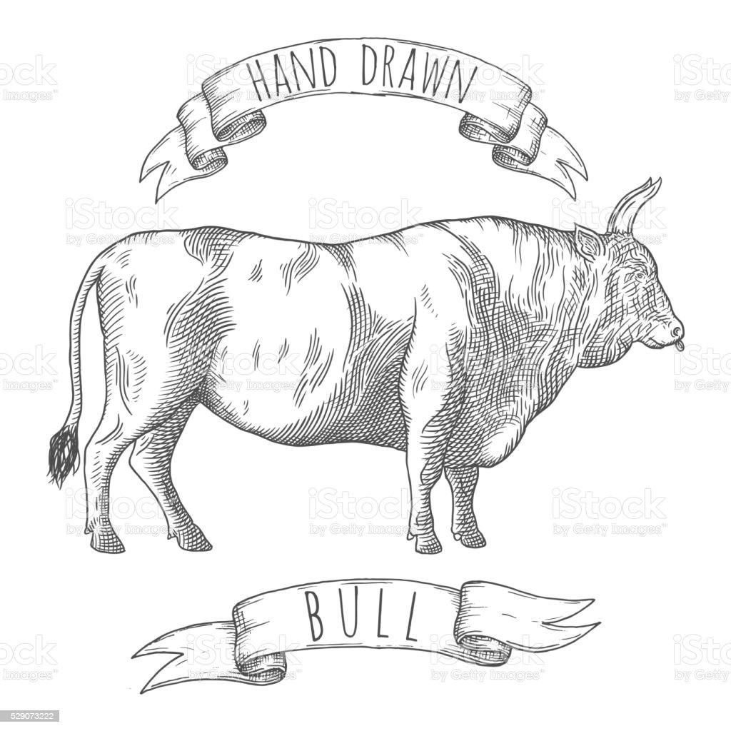 Bull hand drawn illustration. vector art illustration