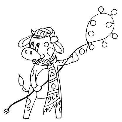 A bull in winter clothes and made a lasso