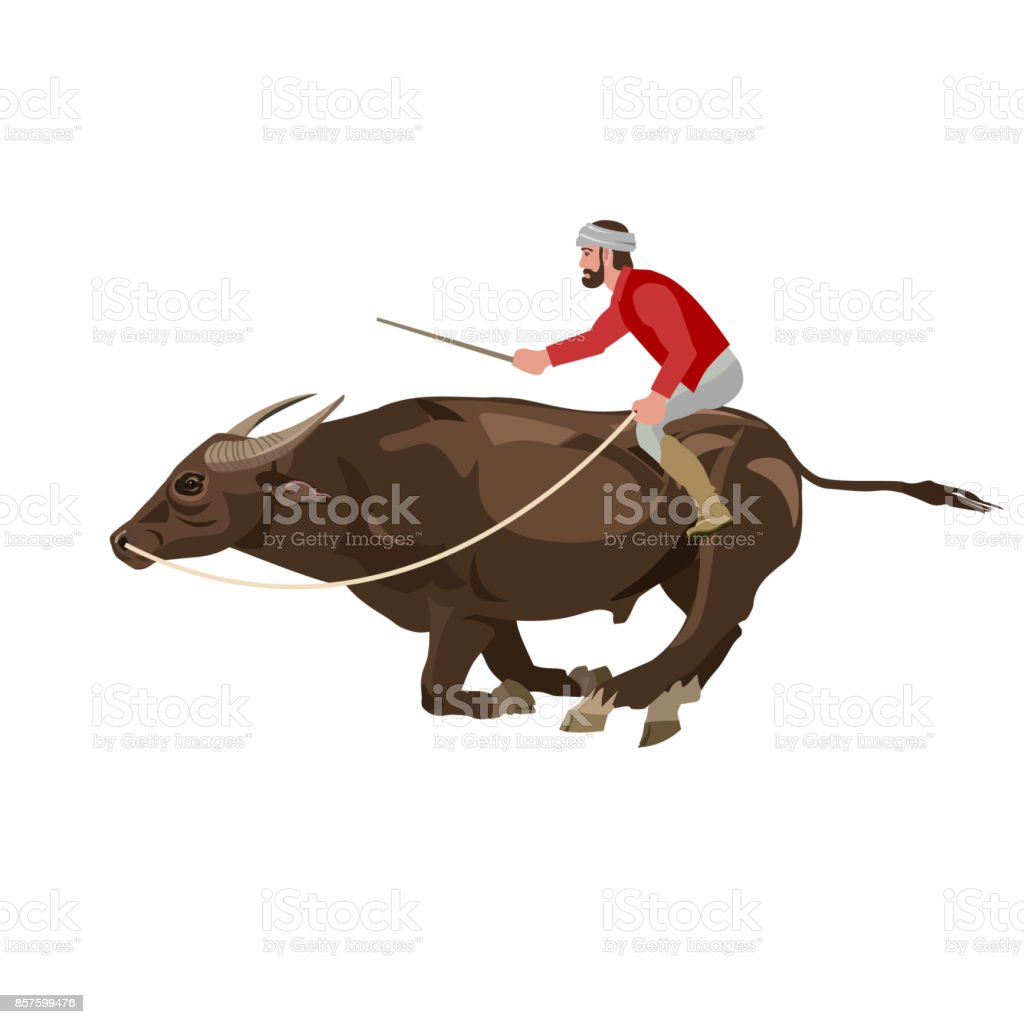 Bull racing vector vector art illustration