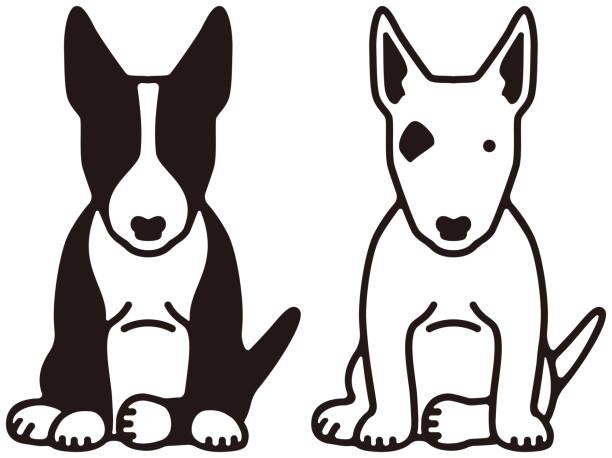 Bull terrier Bull terrier illustrations and モノクロ stock illustrations