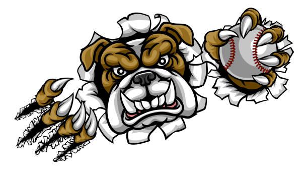 bildbanksillustrationer, clip art samt tecknat material och ikoner med bulldog baseball sport maskot - bulldog