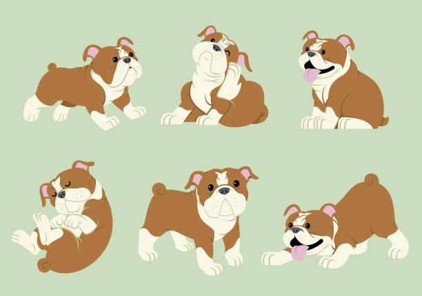 bildbanksillustrationer, clip art samt tecknat material och ikoner med bulldog tecknad set - bulldog