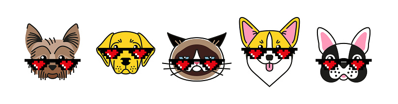 Bulldog, corgi, labrador, terrier and grumpy cat in meme sunglasses