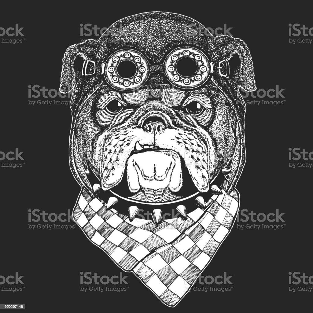 Bulldog Hand drawn vintage image for t-shirt, tattoo, emblem, badge, logo, patch Cool animal wearing aviator, motorcycle, biker helmet. vector art illustration