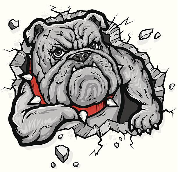 bildbanksillustrationer, clip art samt tecknat material och ikoner med bulldog - bulldog