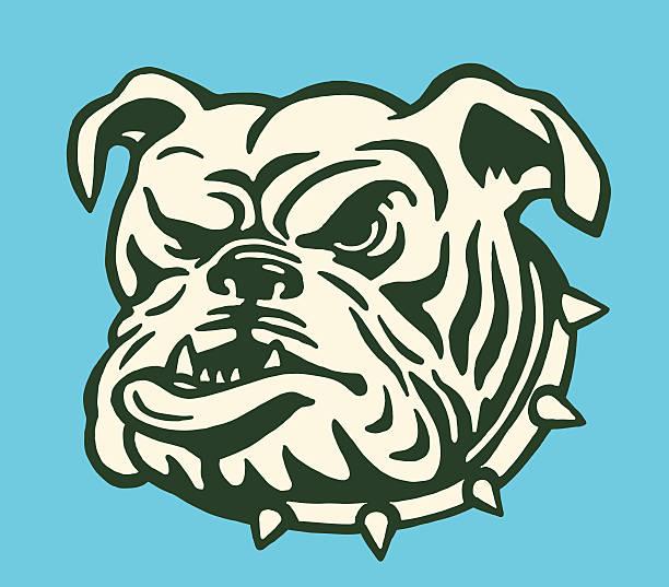 bildbanksillustrationer, clip art samt tecknat material och ikoner med bulldog with spiked collar - bulldog