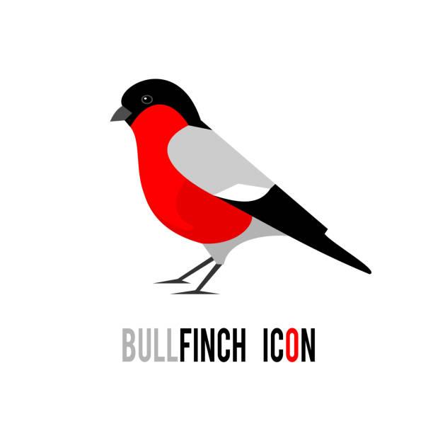 gimpel (pyrrhula pyrrhula, eurasische gimpel) vogel-symbol isoliert auf weißem hintergrund - dompfaff stock-grafiken, -clipart, -cartoons und -symbole