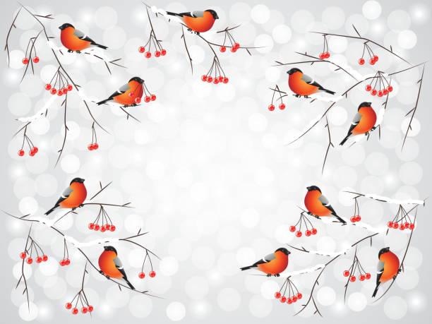 dompfaff vögeln auf zweigen winter hintergrund - dompfaff stock-grafiken, -clipart, -cartoons und -symbole