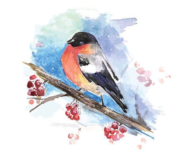 bullfinch on the branch of mountain ash. watercolor vector - dompfaff stock-grafiken, -clipart, -cartoons und -symbole