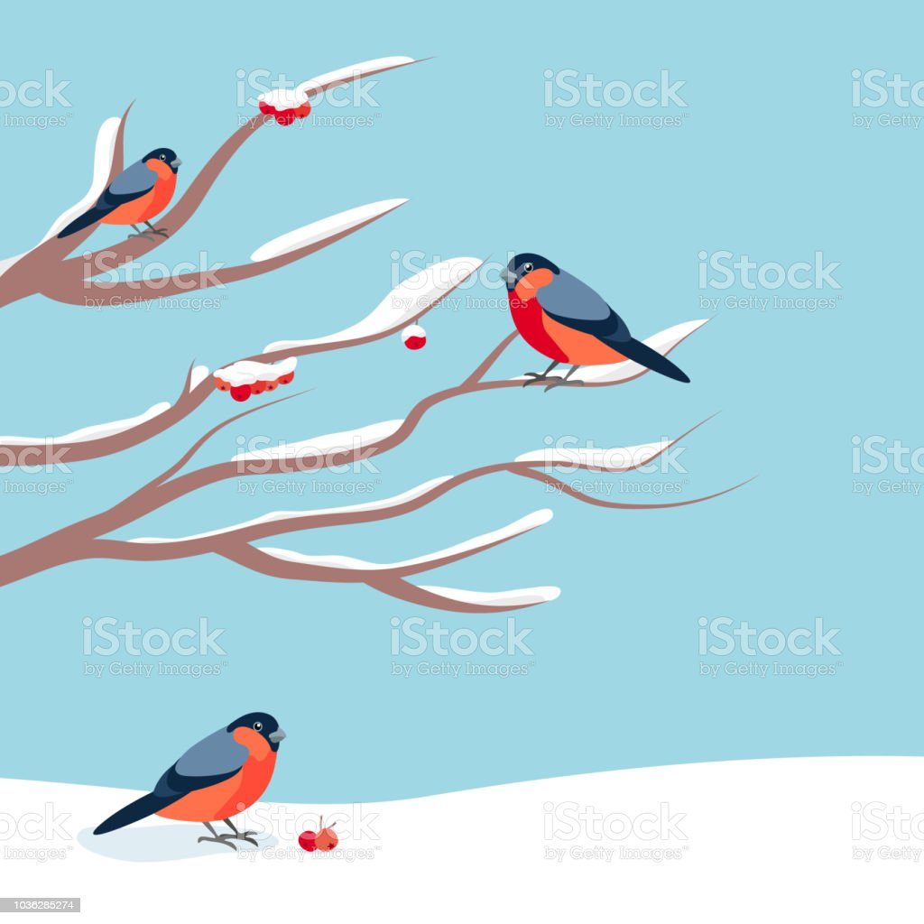 Bullfinch Sitting On Snowcovered Branch Of Mountain Ash Christmas ...