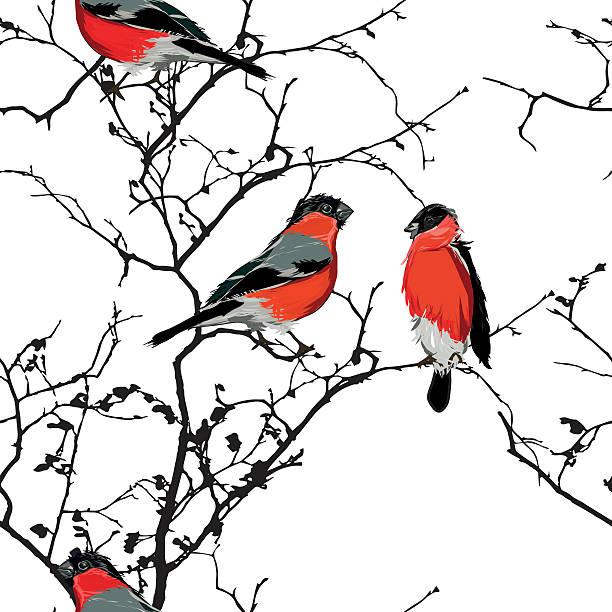 bullfinches auf dem ast nahtlose vektor-muster - dompfaff stock-grafiken, -clipart, -cartoons und -symbole