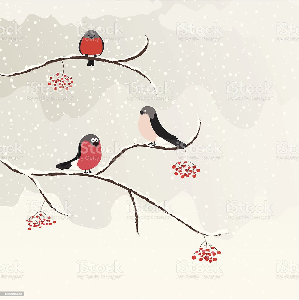 Bullfinches royalty-free bullfinches stock vector art & more images of animal
