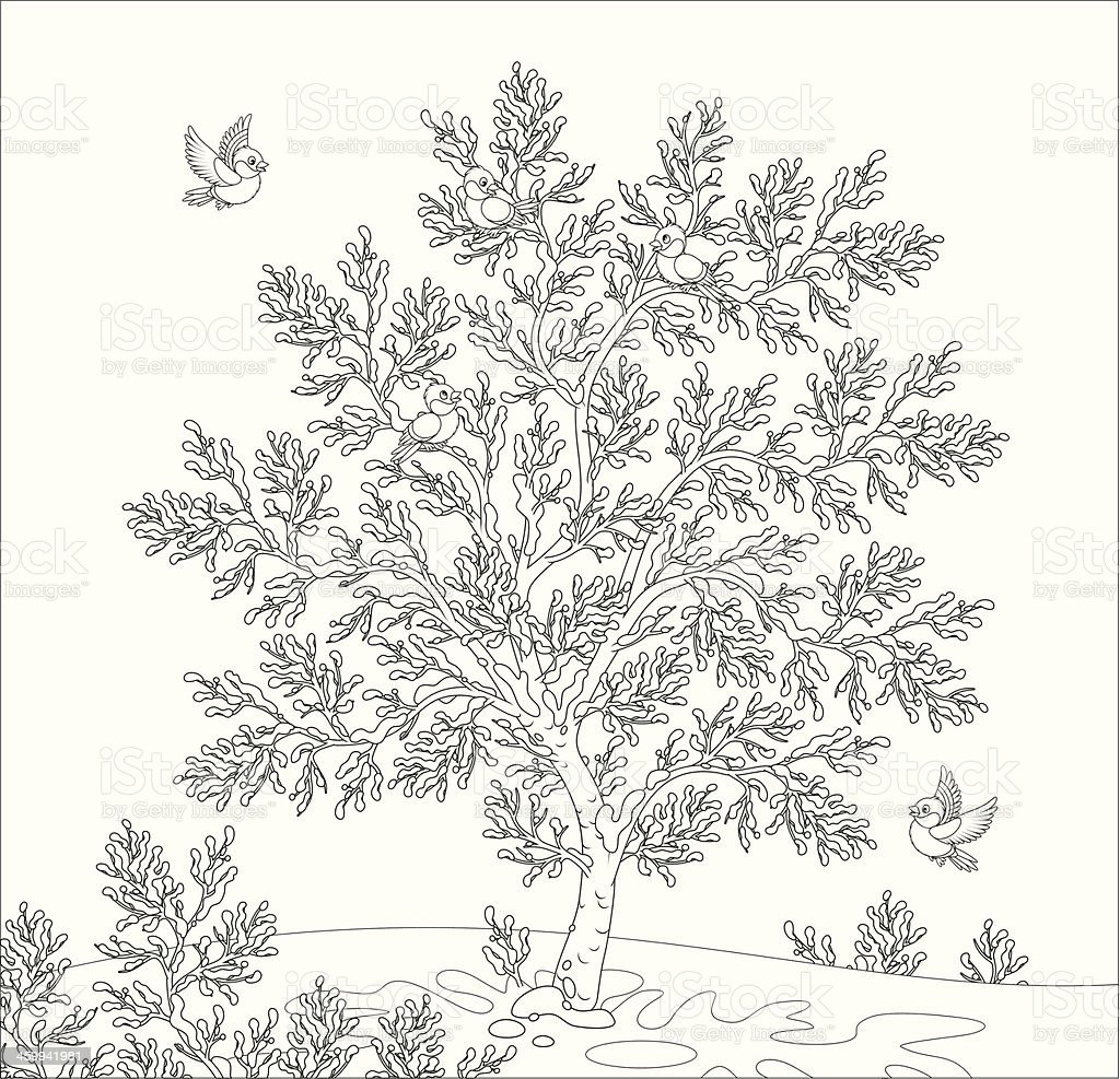 bullfinches royalty-free stock vector art