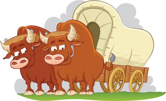 Bulls drawn covered wagon