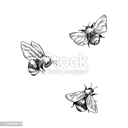 Bumblebee insect animal engraving vector illustration. Black and white hand drawn image.