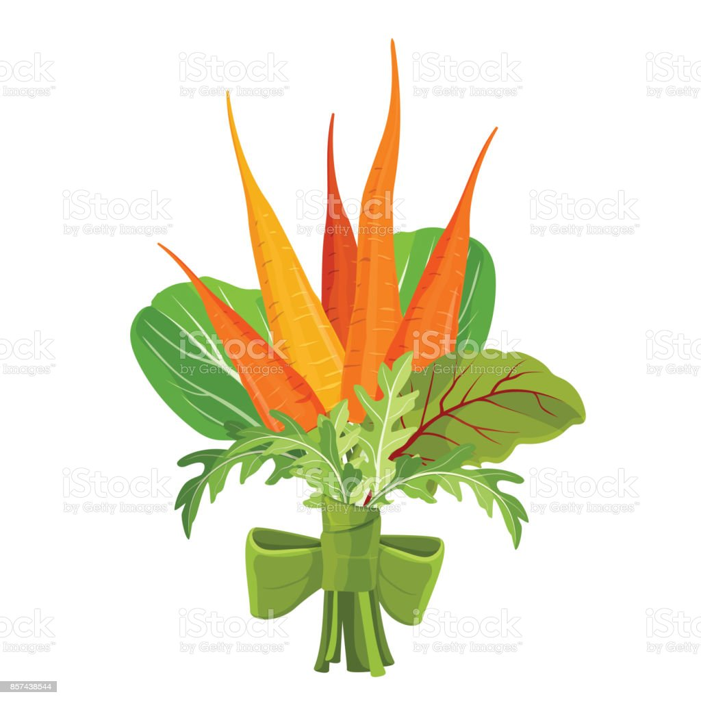 Bunch of carrots bound with parsley, green spinach and chard vector art illustration
