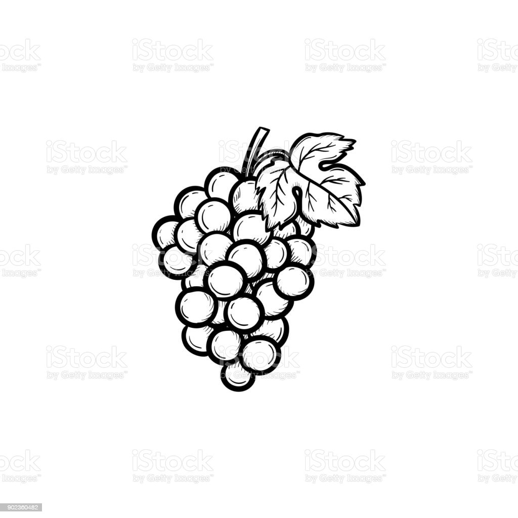 Bunch of grapes hand drawn sketch icon vector art illustration