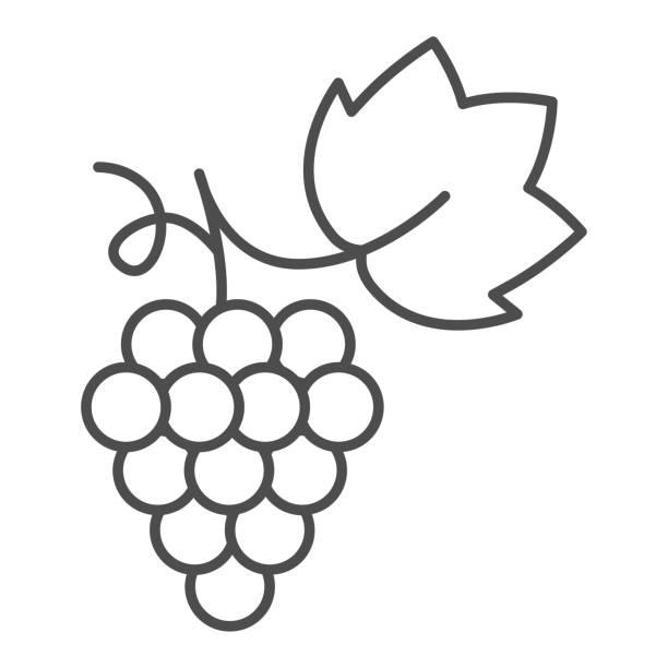 포도 얇은 라인 아이콘, 여름 개념, 흰색 배경에 포도 사인, 모바일 개념 및 웹 디자인을위한 윤곽 스타일에서 잎 아이콘과 와인 포도의 무리. 벡터 그래픽. - 잘 익은 stock illustrations