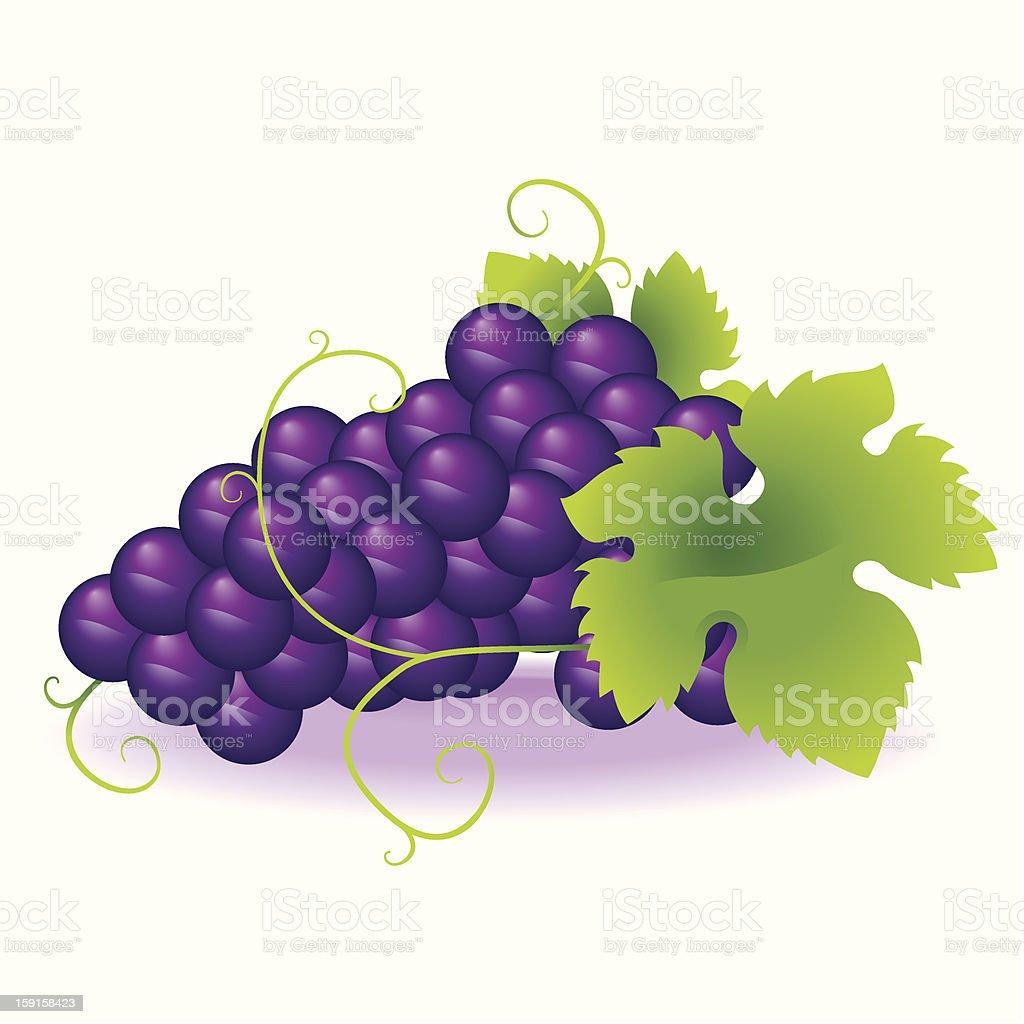 Bunch of grapes, , Adobe Illustrator
