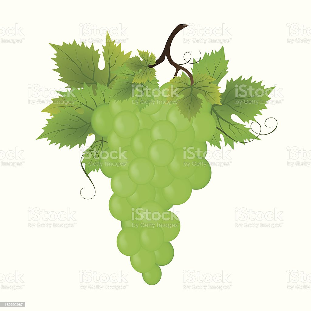 Bunch of green grapes, vector illustration royalty-free bunch of green grapes vector illustration stock vector art & more images of abstract