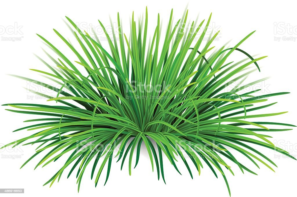 Bunch of green grass vector art illustration