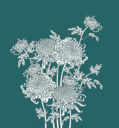 Bunch of Japanese flower chrysanthemum. Outline drawing ink style. Illustration luxury design. Monochrome graphic.