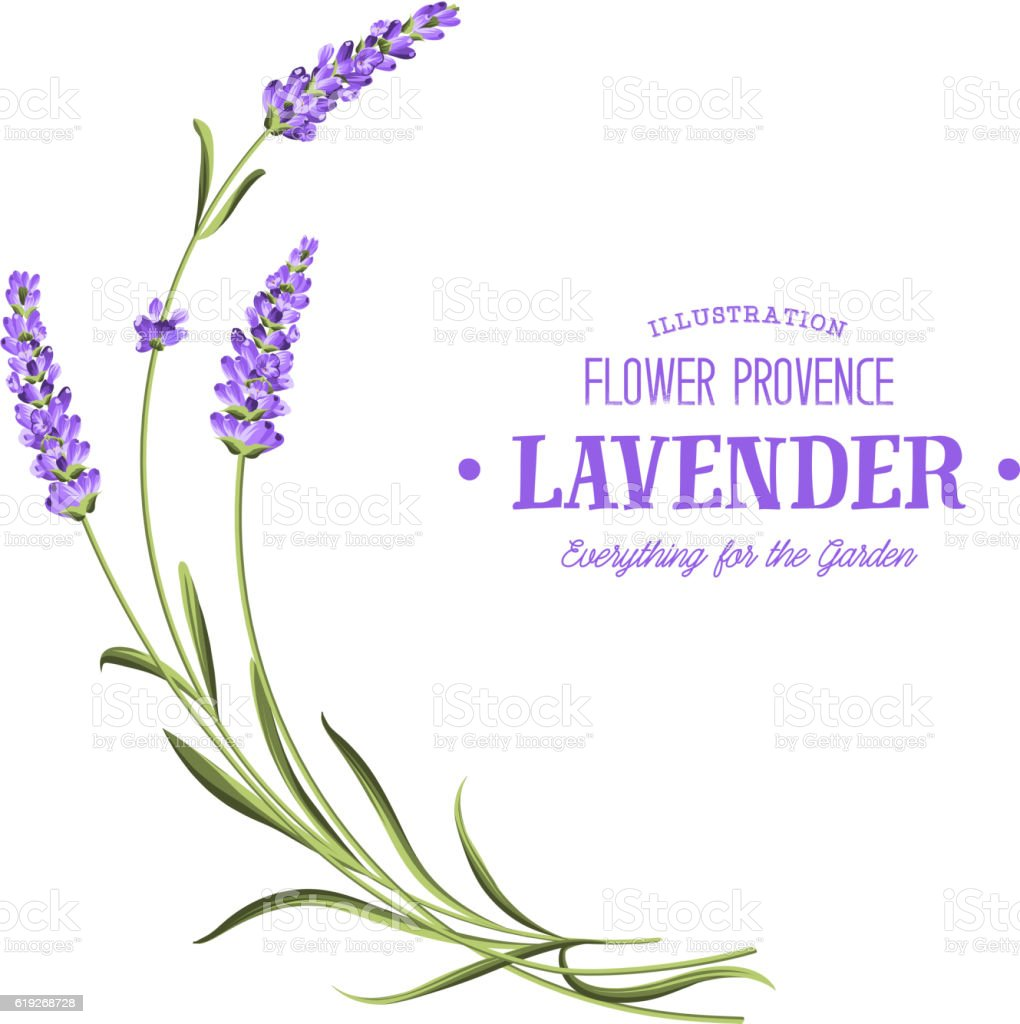 royalty free lavender clip art vector images illustrations istock rh istockphoto com lavender clipart free clipart lavender sprig