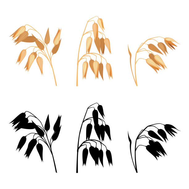 ilustrações de stock, clip art, desenhos animados e ícones de bunch of oats collection isolated on white. - aveia
